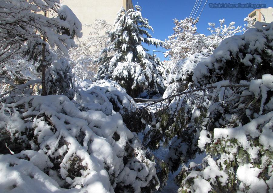 درختان تبریز