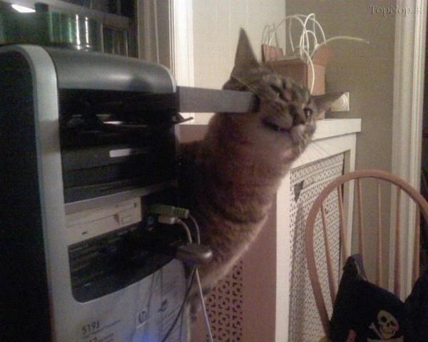 فک گربه