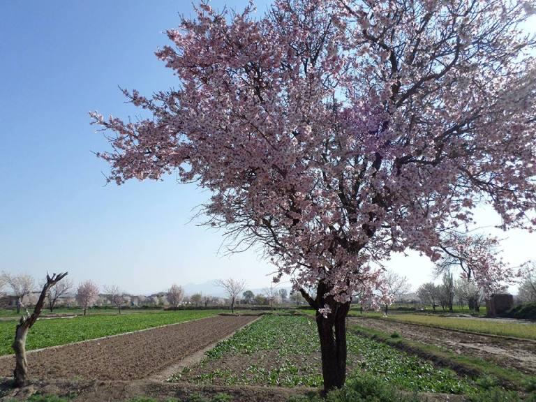 باغات راه آهن تبریز