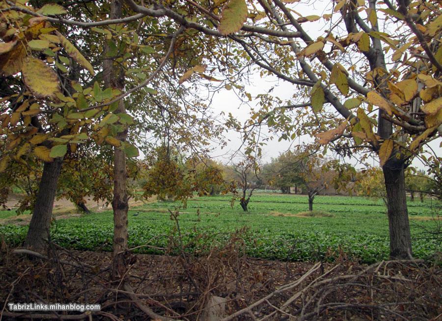باغهای غرب تبریز